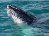 whales-and-dolphins-083_1