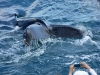 whales-and-dolphins-237_1
